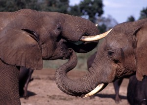 Tansania: Ein faszinierendes Reiseziel