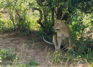 Uganda - Ideal für Natur- und Tierliebhaber