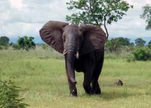 Erleben Sie die einzigartige Fauna und Flora Afrikas